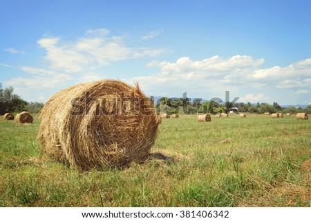 Hay bale in the summer field