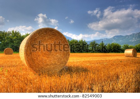 Hay bale on a grain field after harvest