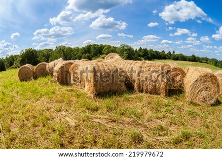 Hay bales at the field under blue sky in summer day - stock photo