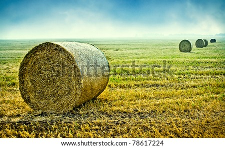 hay bales harvested in the field - stock photo