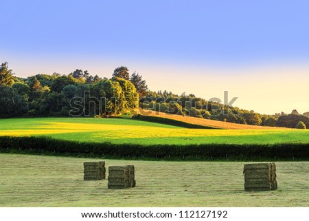 hay bales in a field on a farm - stock photo