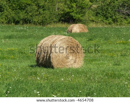hay bales in the field - stock photo