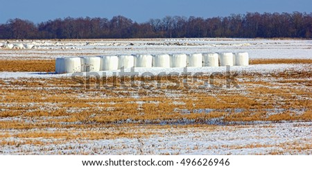 Hay Bales in Winter. forgotten haystacks in field with grass