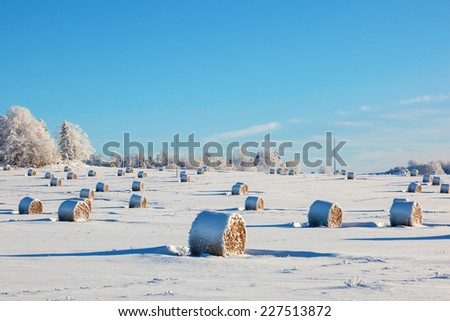 Hay bales on a winter field - stock photo