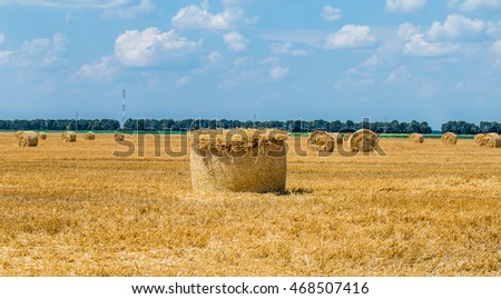 Hay bales on the field after harvest, neatly folded.