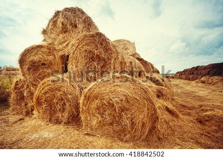 Hay bales on the field at summer time. Agriculture background and concept. Nature landscape. - stock photo