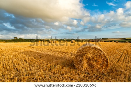 Hay bales under a blue sky near Padstow in Cornwall with wind turbines in the far distance - stock photo