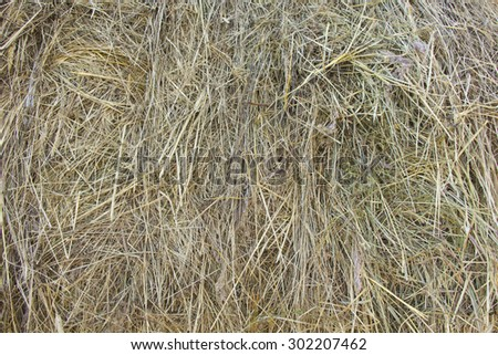 hay dry grass background - stock photo