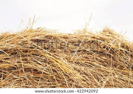 hay in village - stock photo