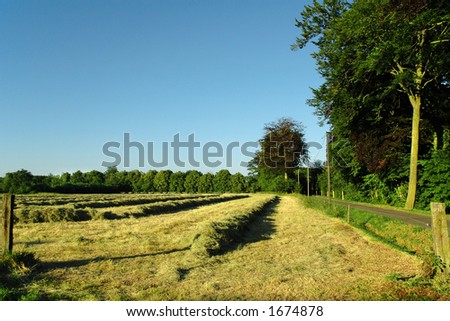 hay making landscape near sunset