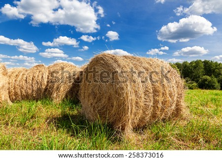 Hay on field under blue sky in summer day - stock photo