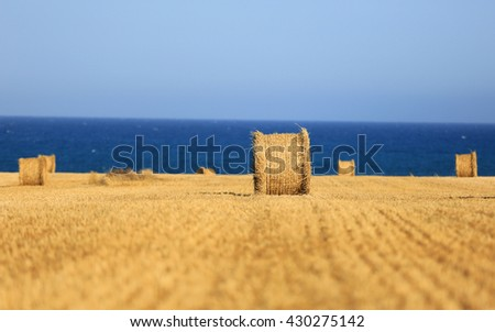 hay roll on meadow near sea - shallow DOF photo