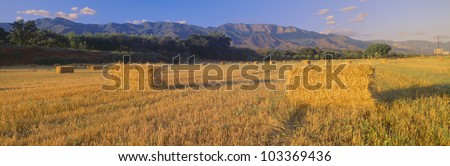 Hayfields in Upper Ojai Valley, California - stock photo