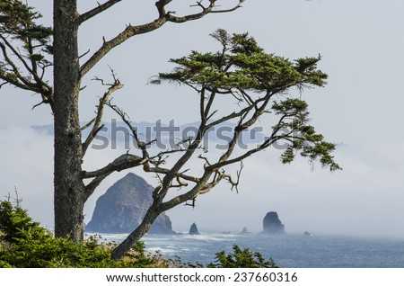 Haystack Rock at Cannon Beach Oregon with coastal fog rolling in and sitka spruce tree - stock photo