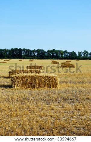 Haystacks in the field against the green trees and blue sky - stock photo