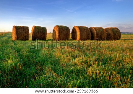 Haystacks on the field. Straw bales drying on a green grass in summer season, Poland. - stock photo