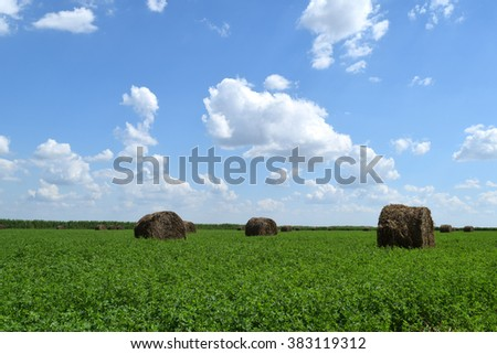 Haystacks rolled up in bales of alfalfa. Forage for livestock in winter. - stock photo