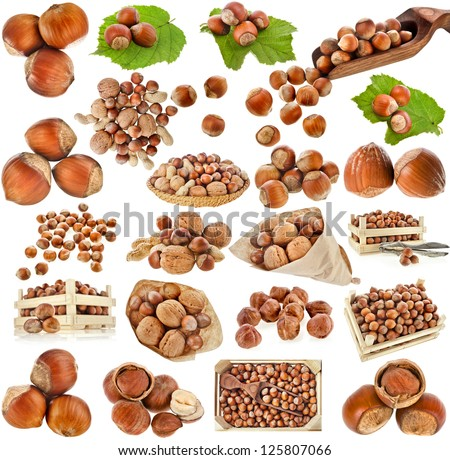 hazelnut filbert nuts , collection set  isolated on a white background - stock photo
