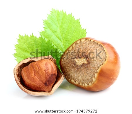 Hazelnut in shell with leaves. - stock photo