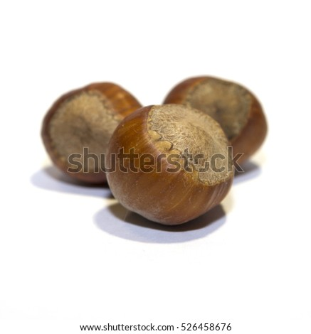 hazelnut on white background