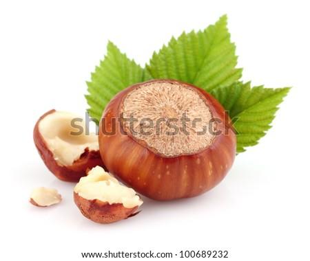 Hazelnut with kernel - stock photo