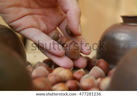 Hazelnuts in the hands of a girl