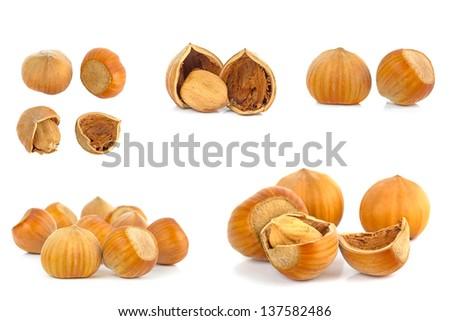 Hazelnuts isolated on white background - stock photo