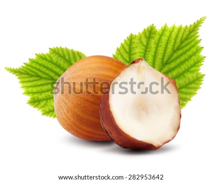 Hazelnuts with green leaves on white background - stock photo