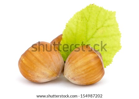 Hazelnuts with leaf over a white background