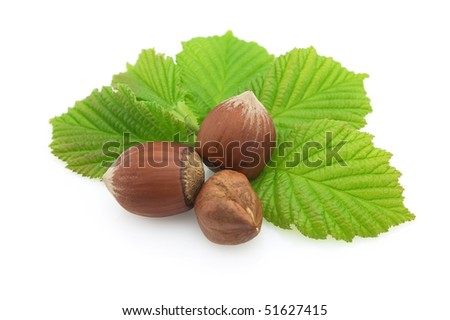 Hazelnuts with leaves