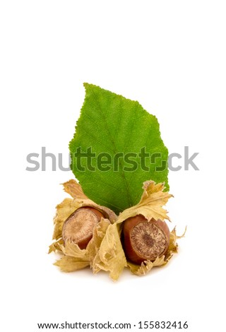 Hazelnuts with leaves, isolated over white background  - stock photo