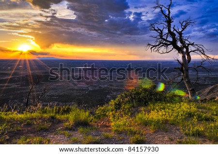 HDR image of dead tree against dramatic stormy sky taken in Mesa Verde National Park in Colorado - stock photo