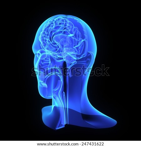 Head anatomy - stock photo
