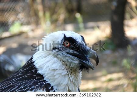 head birds of prey at the zoo - stock photo