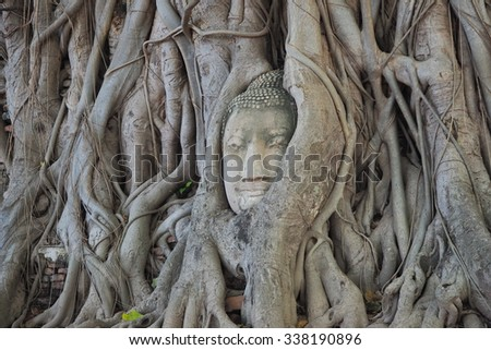 Head Buddha in The Tree