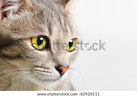 head cat close up on a white background - stock photo