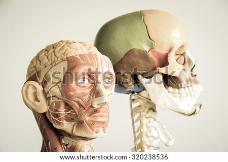 head human anatomy model with old style, selective focus - stock photo