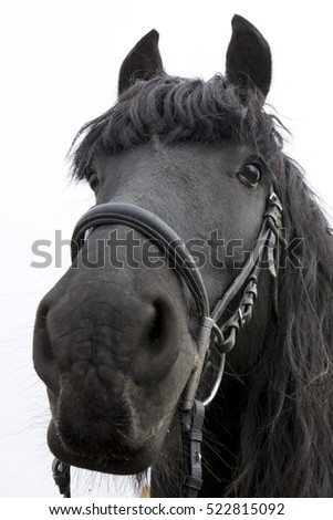 head of a black horse