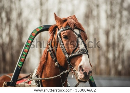 Head of a brown horse in harness - stock photo