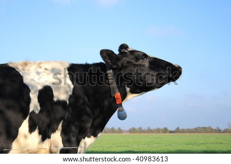 Head of a cow, The Netherlands - stock photo