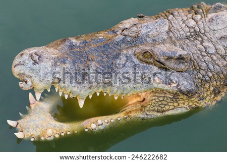 Head of a crocodile in the water. - stock photo