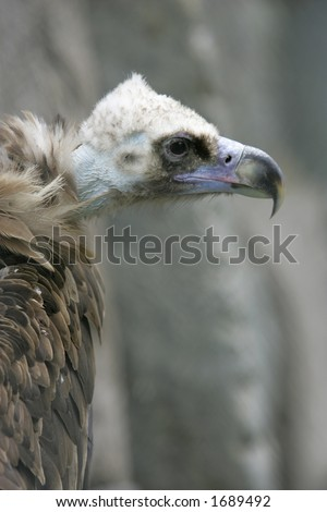 Head of a griffin - stock photo