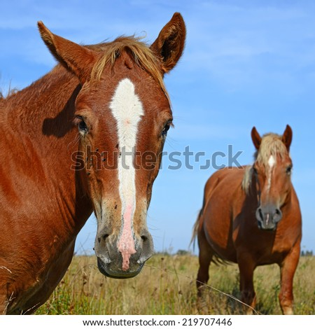 Head of a horse against a pasture - stock photo
