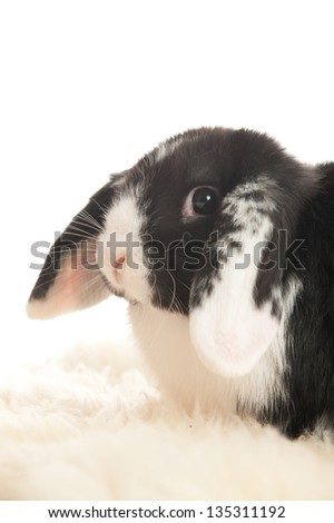 Head of a lop-eared rabbit in profile - stock photo