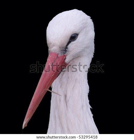 Head of a stork over a black background - stock photo