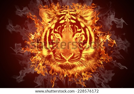 Head of a tiger in tongues of flame - stock photo
