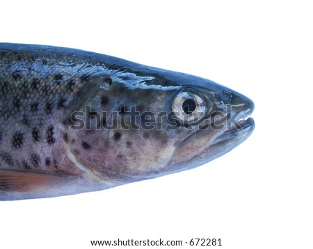 Head of a trout. - stock photo