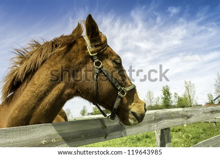 Head of an horse in a farm by wooden fence