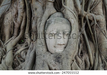 Head of Buddha  at Wat Mahathat temple, Ayutthaya, Thailand.