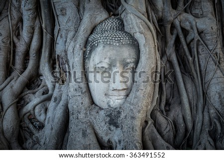 Head of Buddha statue in the tree roots at Wat Mahathat, Ayutthaya, Thailand. - stock photo